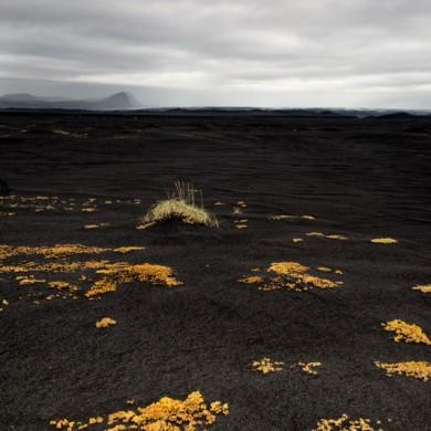 Iceland 2014 Sander