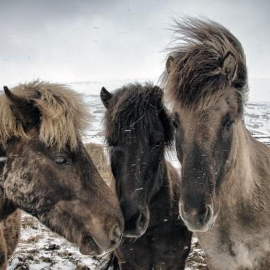 Iceland 2015 Goðafoss