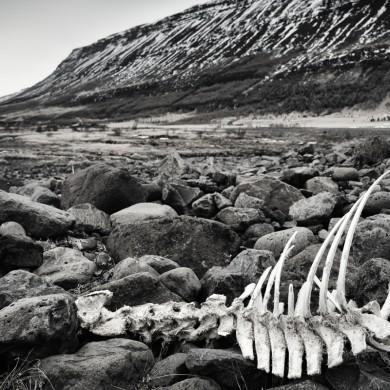 Iceland 2015 Lagarfljót