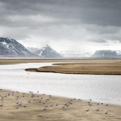 Iceland 2015 Westfjorde