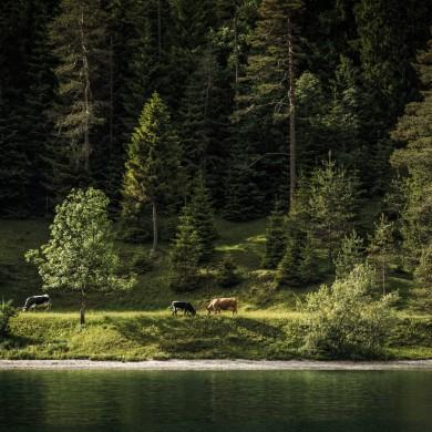 Alpen Sommer 2017 - Heiterwang