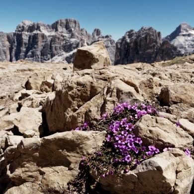Alpen Sommer 2017 - Lagazuoi